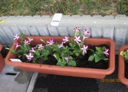 地域の子供たちと道路脇のプランターに植栽。