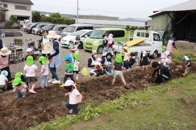 「ひまわり農園」晴天に恵まれて…待ちにまったじゃがいも掘り!い~っぱいじゃがいもが出てきて、みんな大喜び